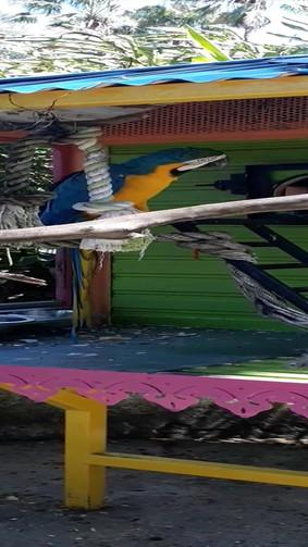 Roger le perroquet