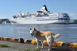 背景(豪華客船と犬)