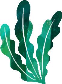 装飾-海藻(大L)