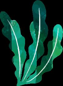 装飾-海藻(大R)