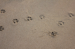 背景(砂浜の足跡)