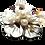 Thumbnail: Broche de flor madrepérola