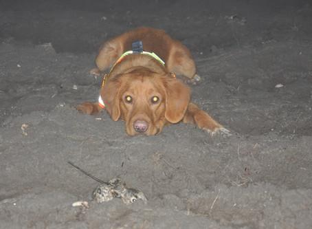 Start Training Junghasen-Spürhund