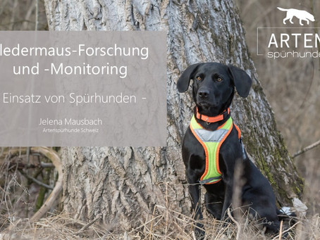 Vorträge über die Fledermaus-Baumquartier-Suche mit Spürhunden