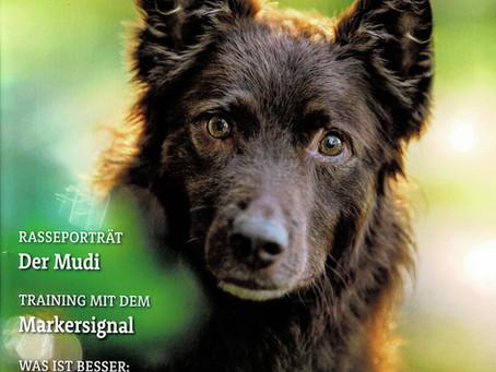 """Das """"Schweizer Hundemagazin"""" berichtet über Artenspürhunde Schweiz"""