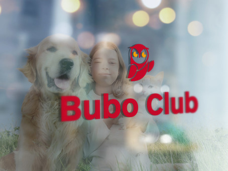 Bubo Anlass in Bern