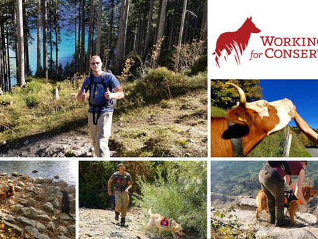 Fachaustausch und Training mit Kyren Zimmermann von Working Dogs for Conservation (USA)