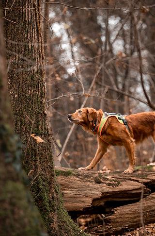 Artenspuerhunde_110.jpg