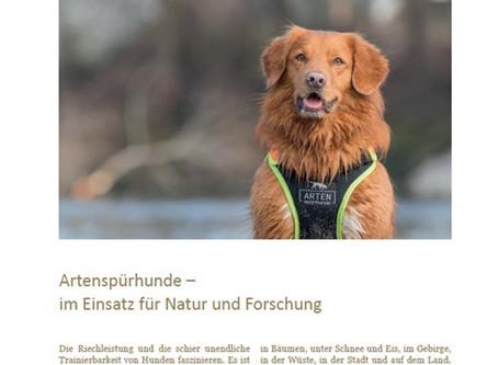 Fauna Focus