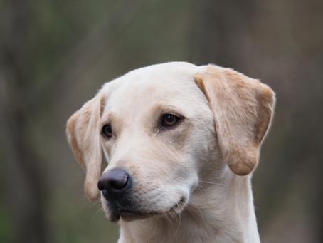 Start Ausbildung Fledermaus-Baumquartier-Spürhund