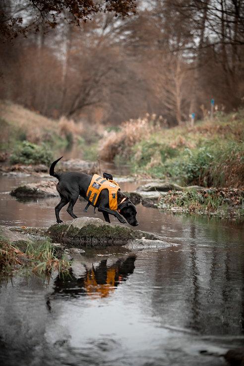 Artenspuerhunde_073.jpg