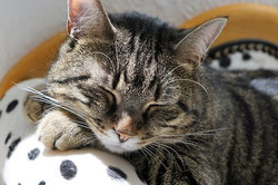 cat-2439140__340.webp