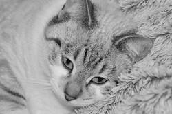 cat-3010697__340.jpg