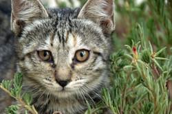 cat-1332740__340.webp