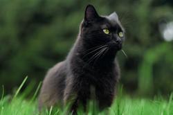cat-4541889__340.webp