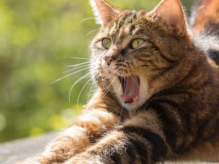 Comment bien nourrir son chat ?