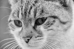 cat-4552967__340.webp
