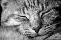 cat-909895__340.webp