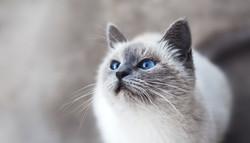 cat-2571970_1920_edited