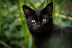 cat-5579221_1920