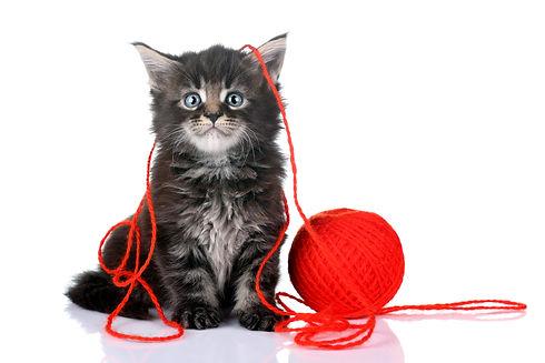 Neelix-Delivery-Manager-Cat.jpg
