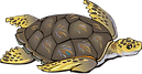 3Free-turtle-clipart.png