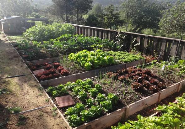 Ibiza's garden