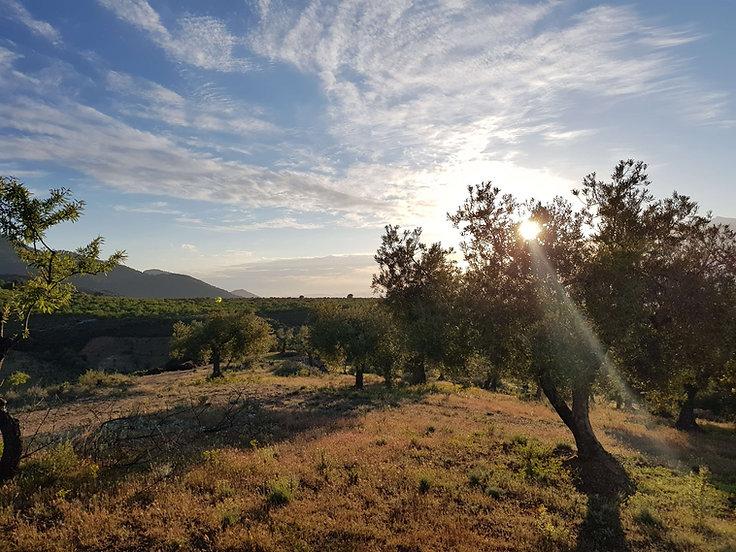 olive field casita verde granada