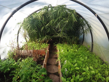 Ibiza's greenhouse for mint