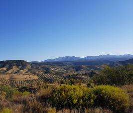 Andalousian landscape