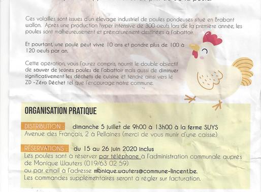 SOS POULES PONDEUSES DE BATTERIE