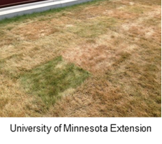 Beat the Brown with Better Watering—How to Prevent Discolored Lawns