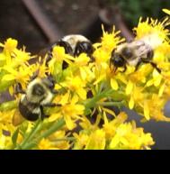 """""""Wild"""" Flower Seed Mixes: Buyer Beware!"""