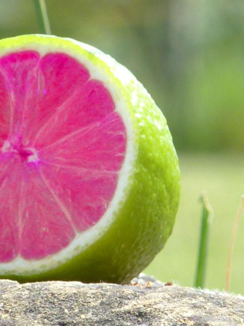 citronvertcatdemoras.jpg