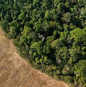 Conservation Image.jpeg
