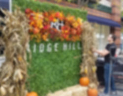 Fall Themed Living Wall Design for October Fest Event!