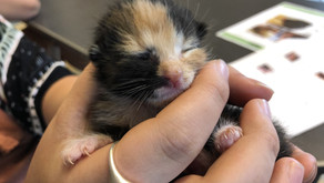 [PRESS RELEASE] New Asheville Organization Works to Save the Lives of Newborn Kittens in Need