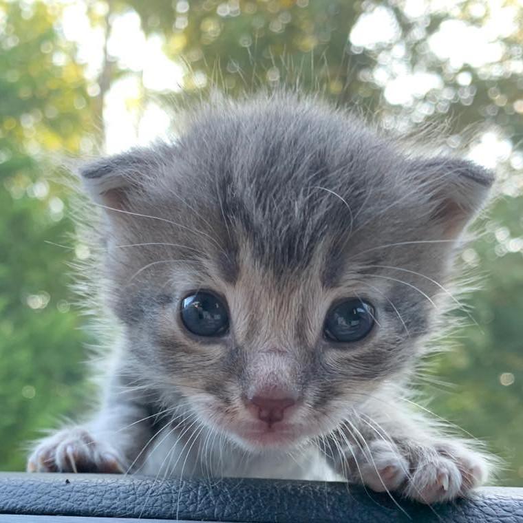 WEBINAR: Bottle Baby Kitten Care 101