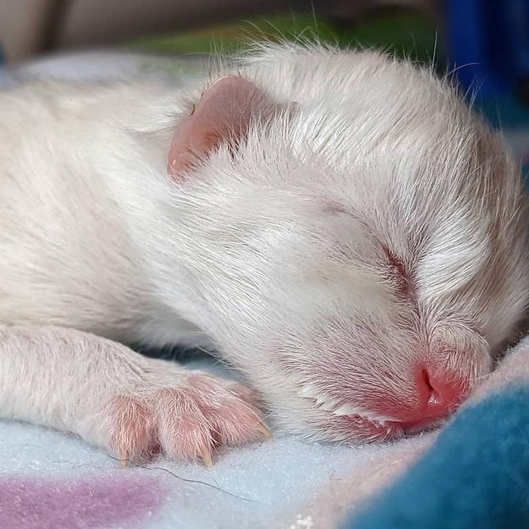 **SOLD OUT** WEBINAR: Bottle Baby Kitten Care 101