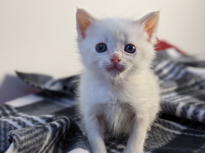Where do orphaned kittens come from?