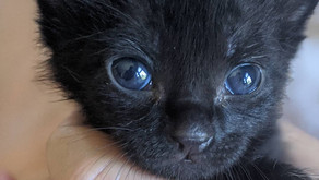 10 Ways to Save Orphaned Newborn Kittens