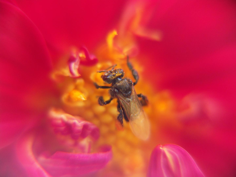 Flor e inseto