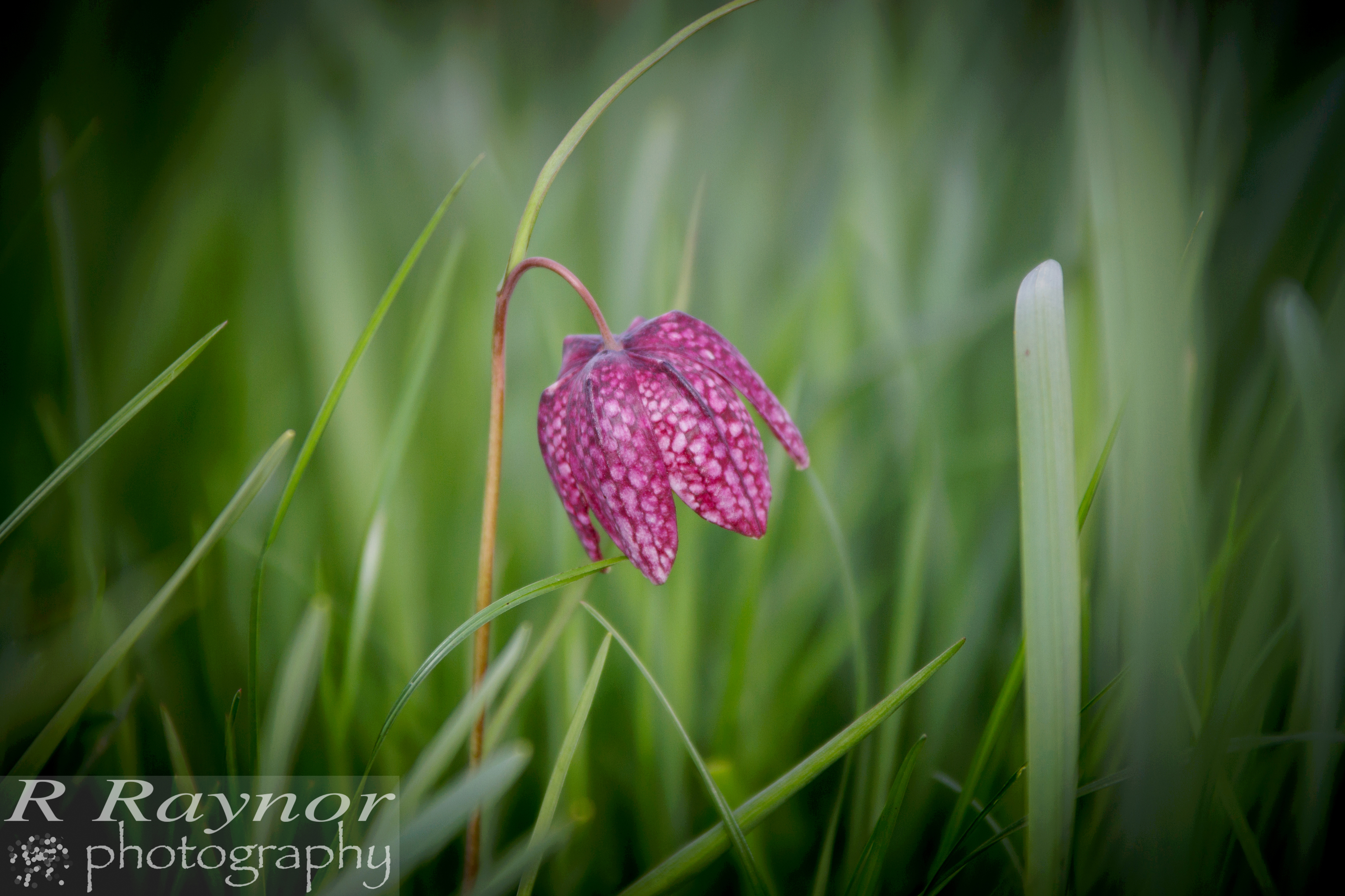 First_20150412_RRaynor0002