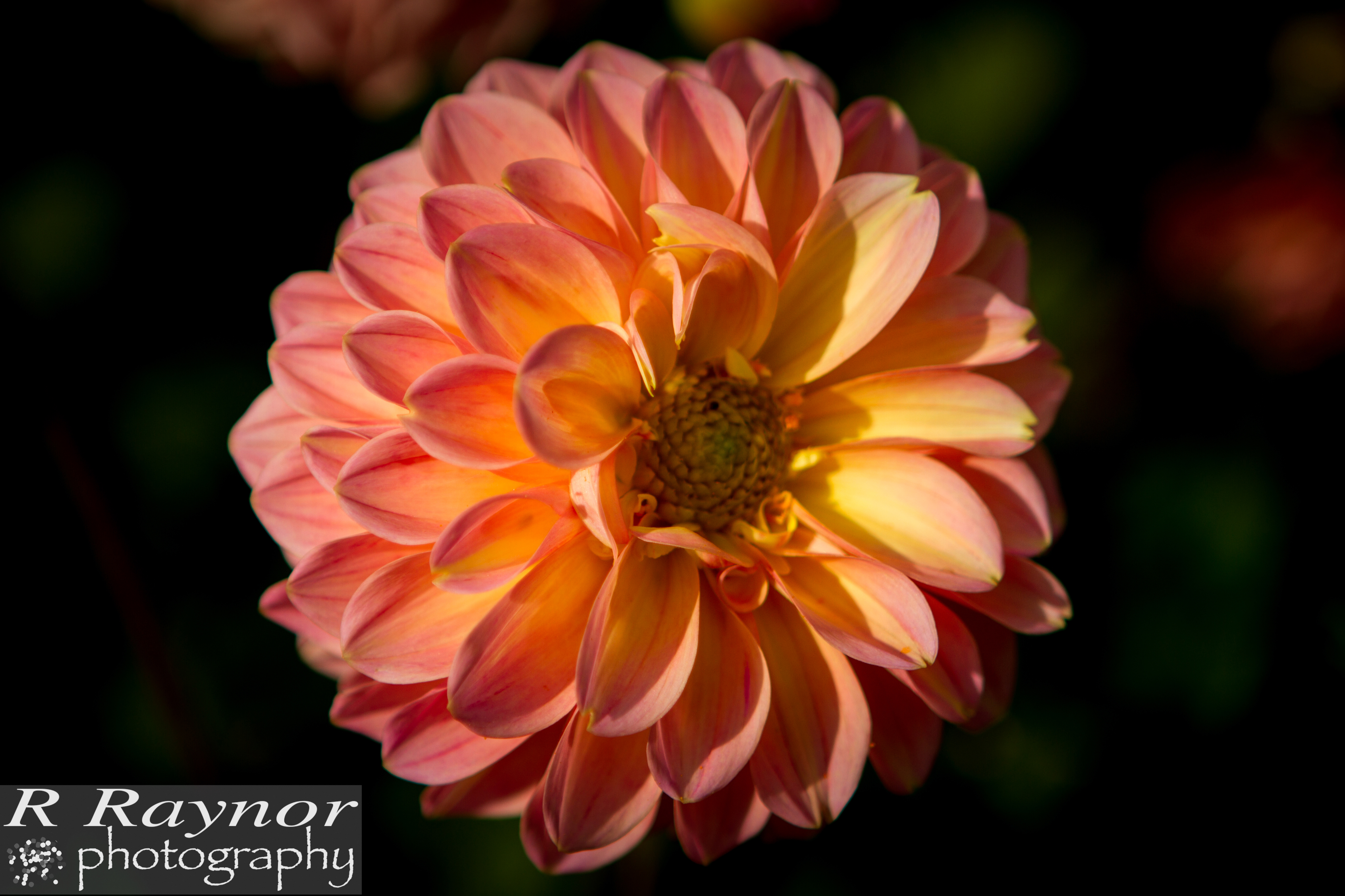 First_20150903_RRaynor0015