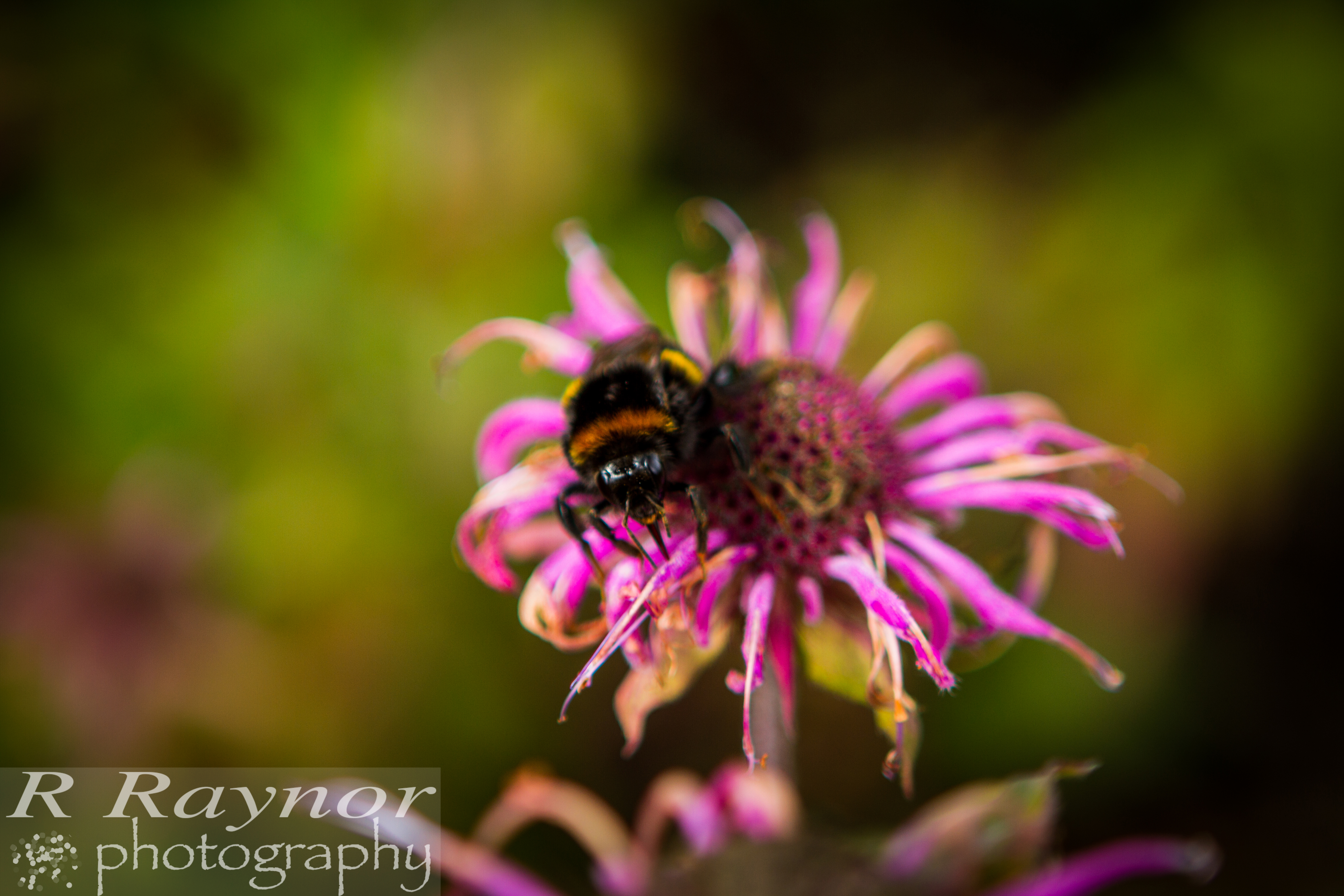 First_20150903_RRaynor0011