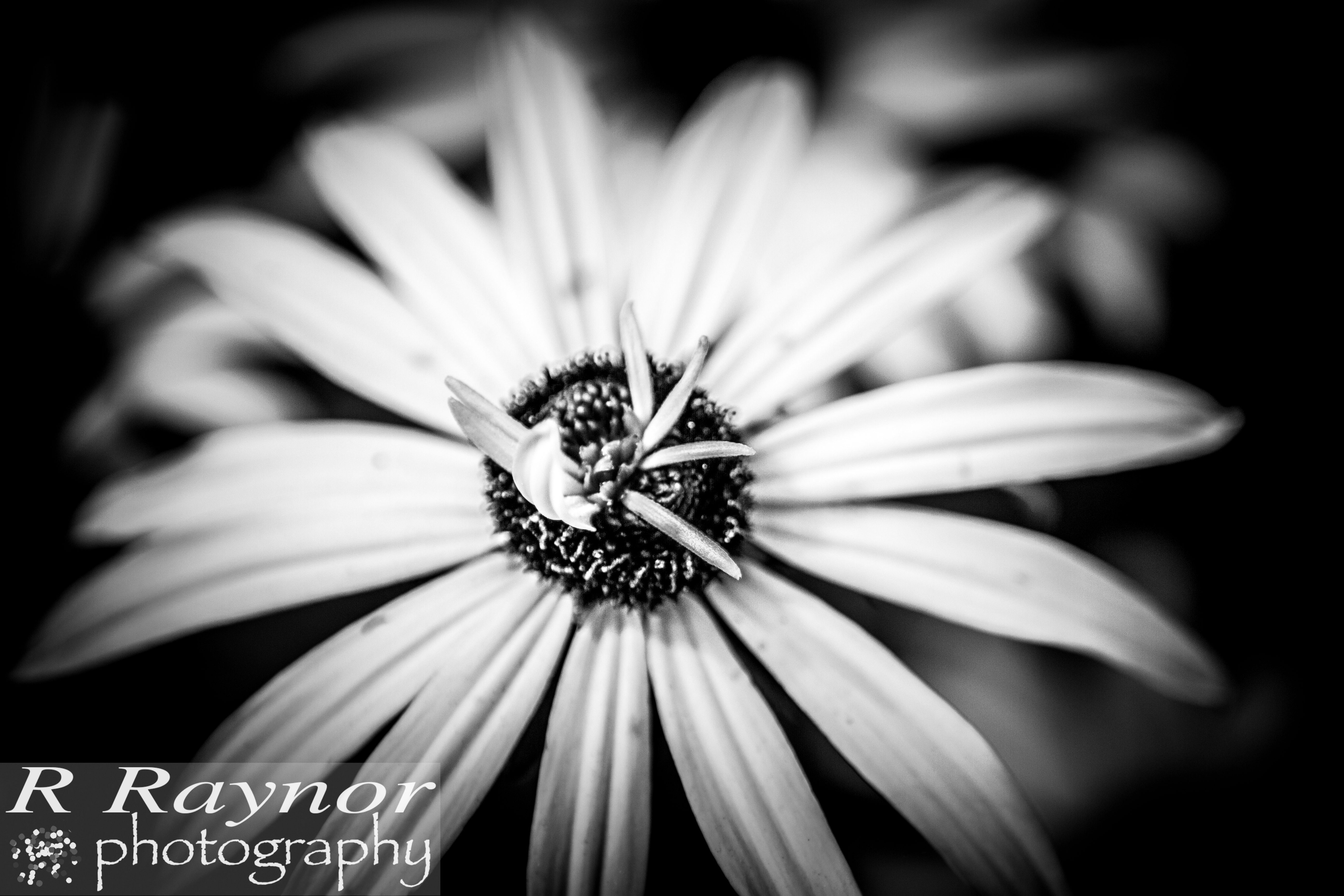 First_20150903_RRaynor0008