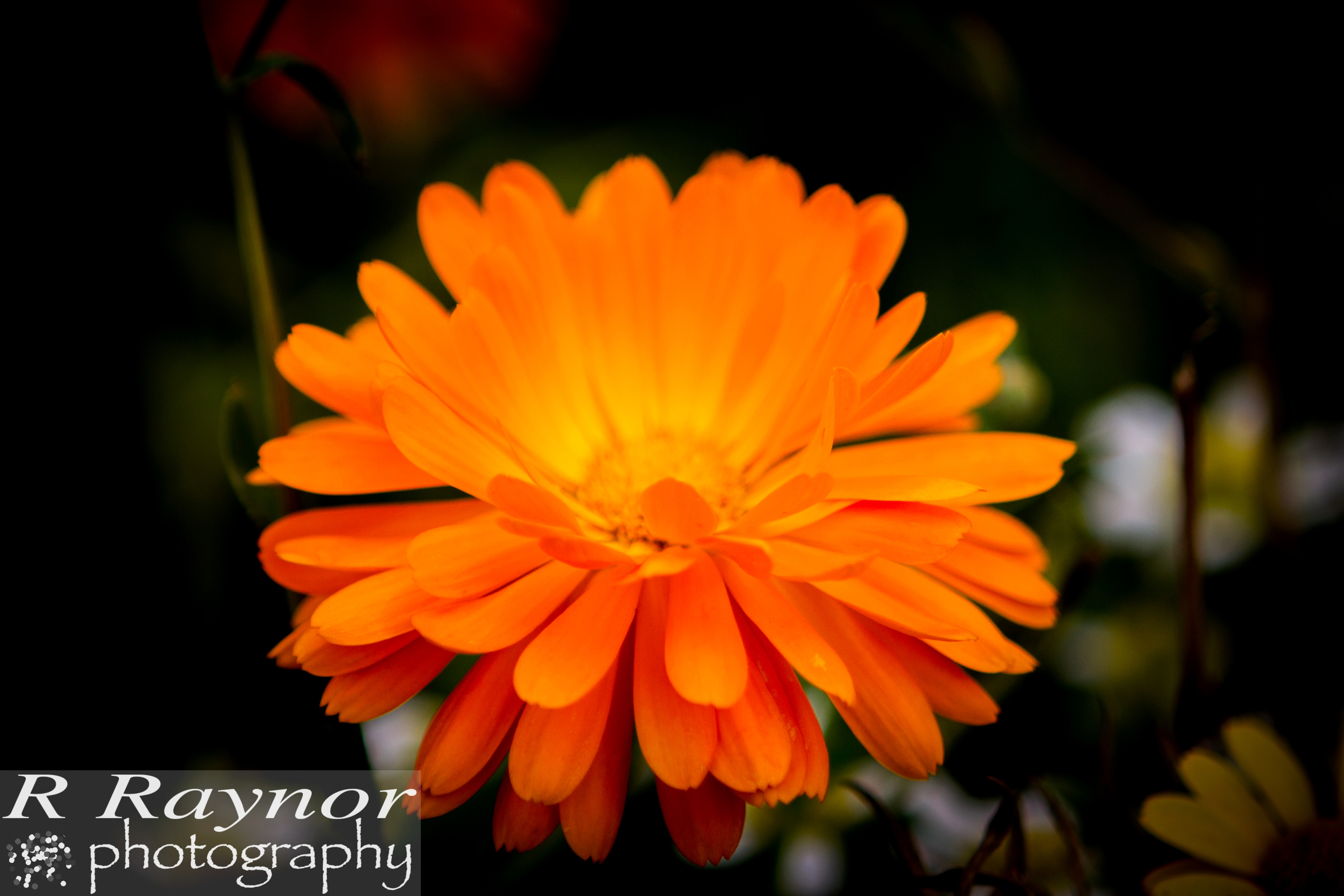 First_20150903_RRaynor0013
