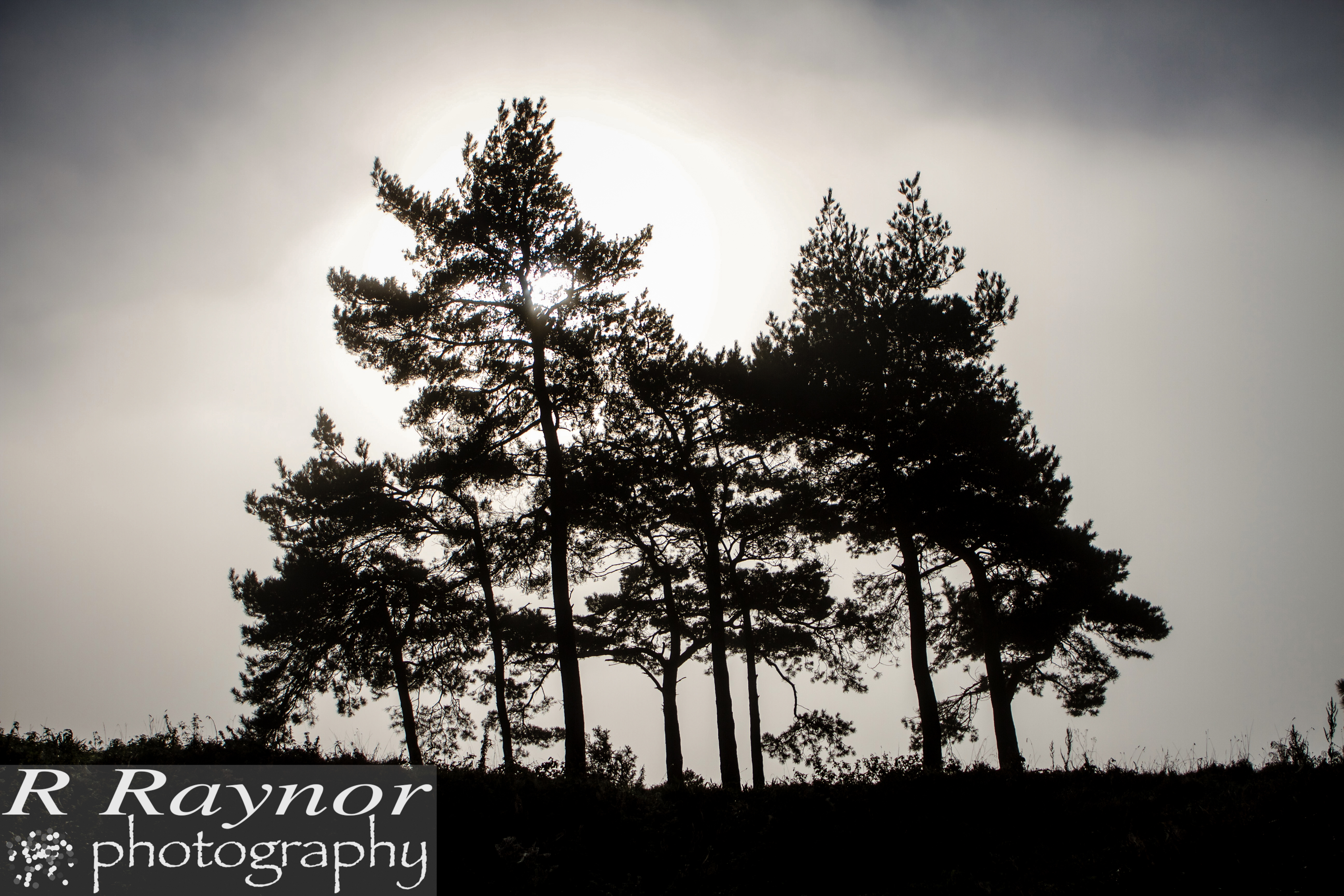 First_20151101_RRaynor0023