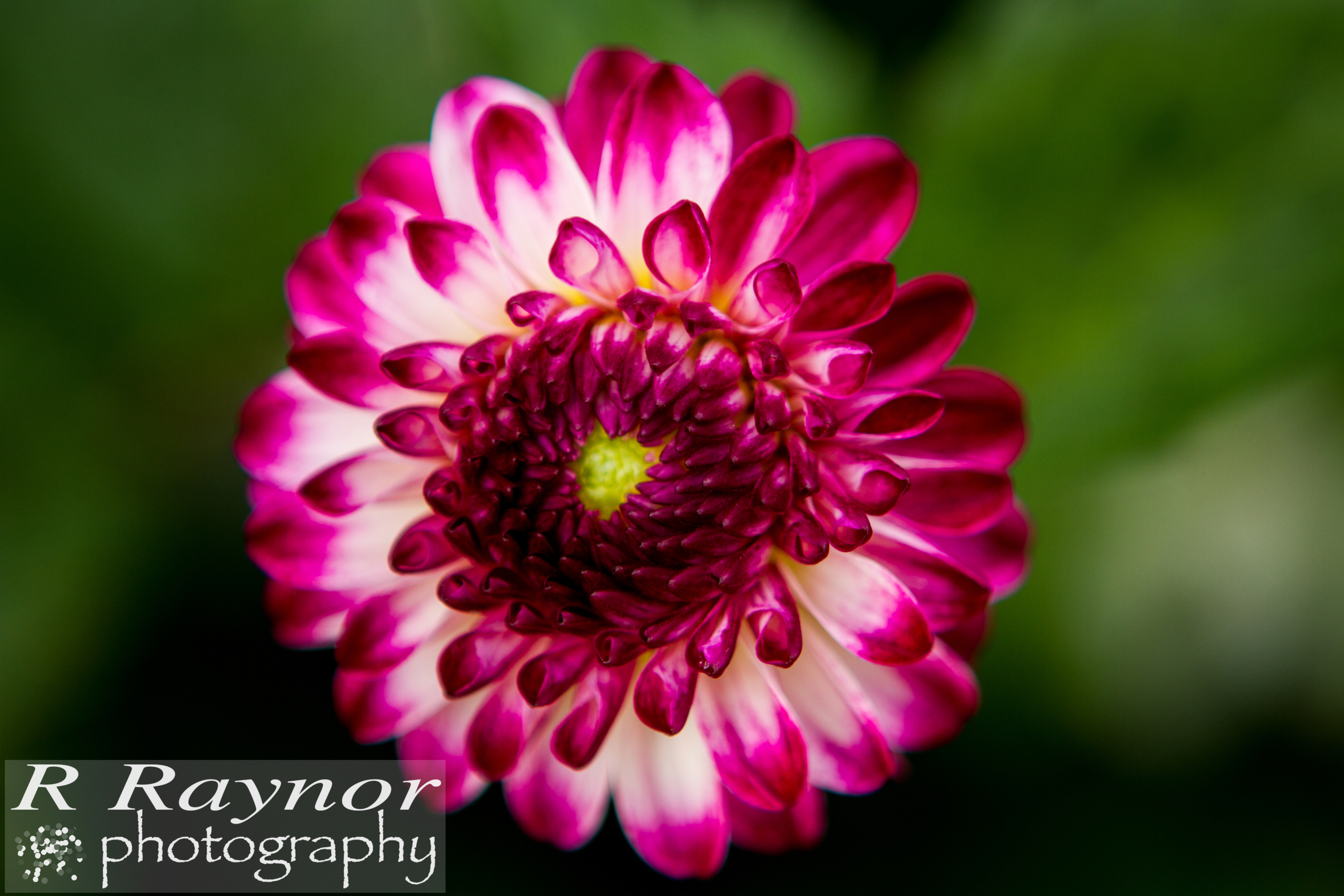 First_20150903_RRaynor0018