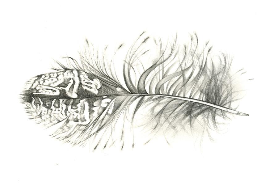 Owl Feather.jpg